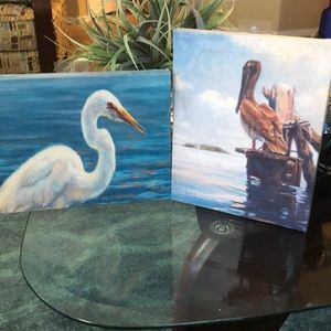 Set of Two 8 x 10 Marine Bird Pictures Set of Two